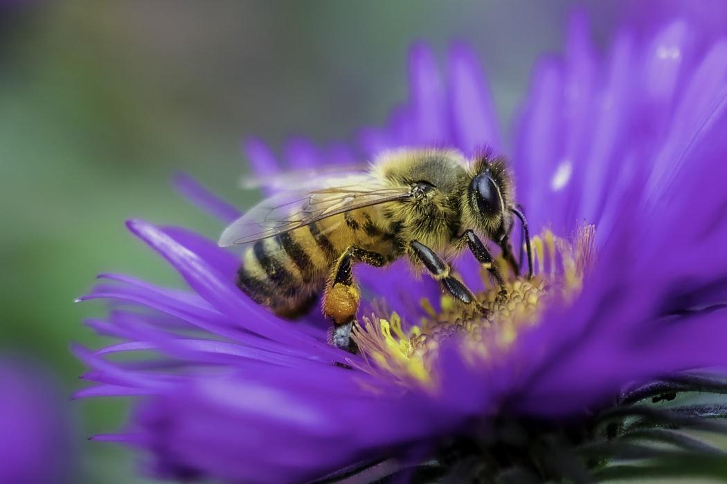 蜂谷すばるイメージ